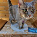Silica Cat Litter