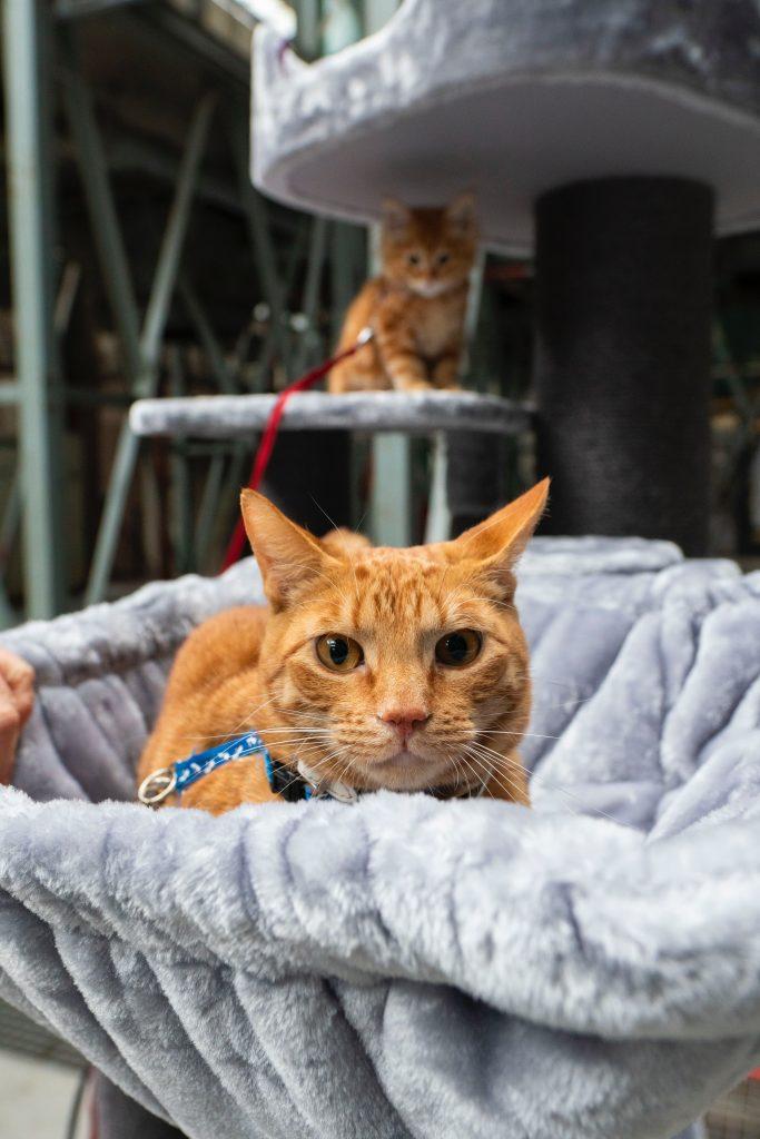 cute orange cat