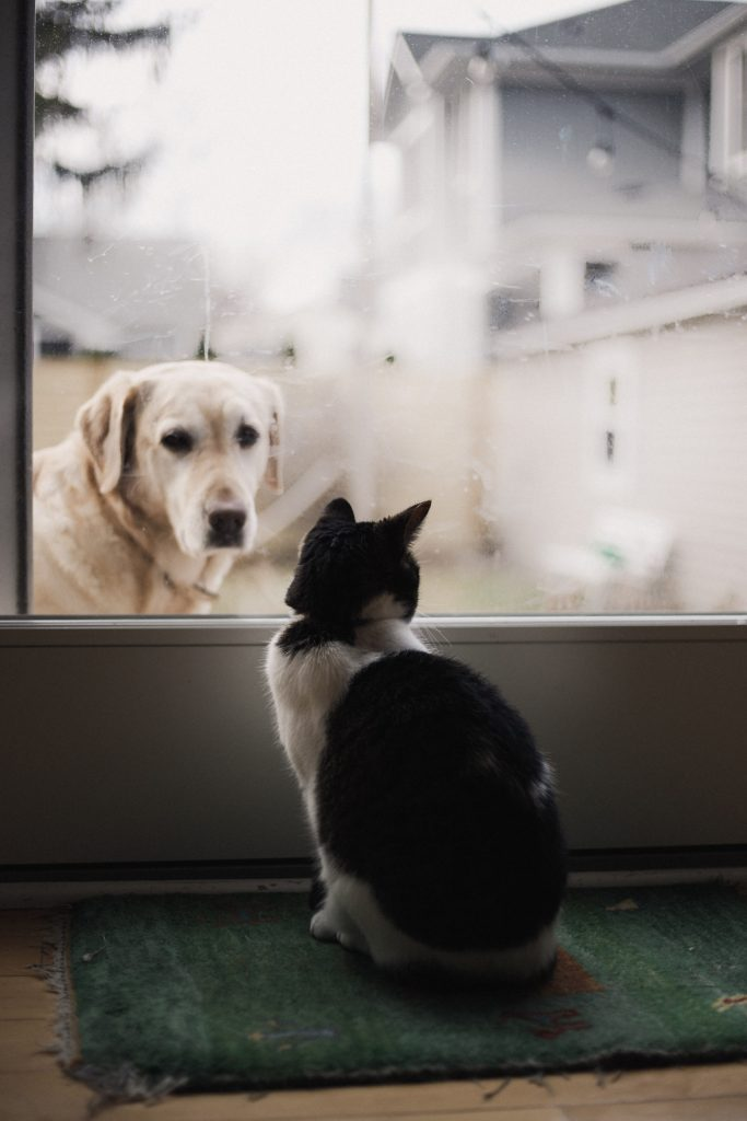can cats and dogs get along