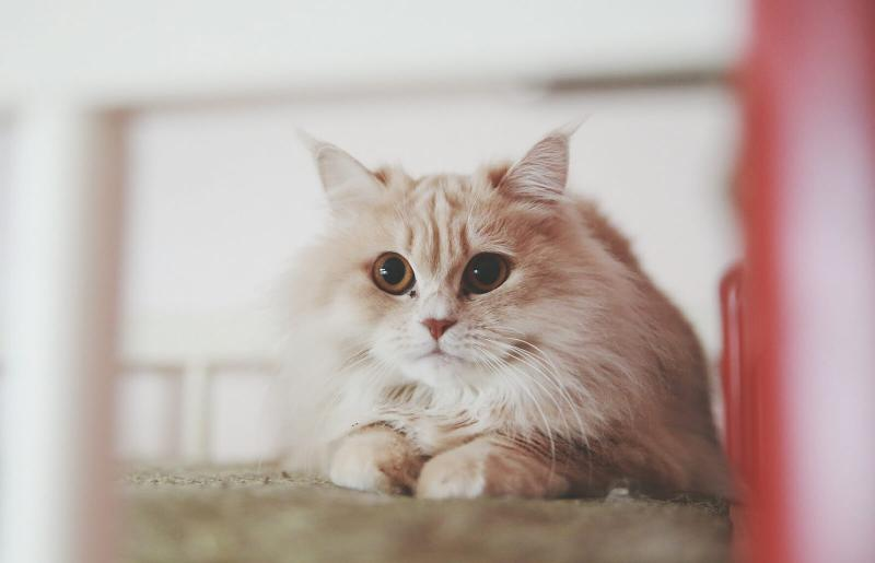 what your cat's eyes are saying
