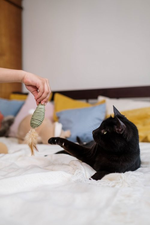 cats love playing with their prey