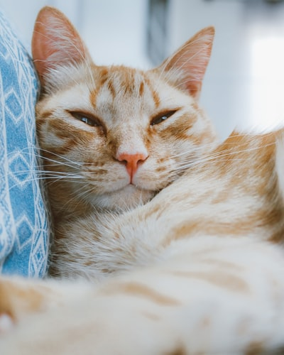 Half Shut Eyes cat sleeping Position