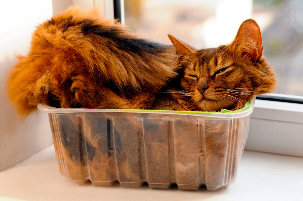 cat in a box sleeping position and their meanings